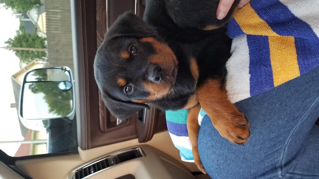 New pup-20160630_191914.jpg