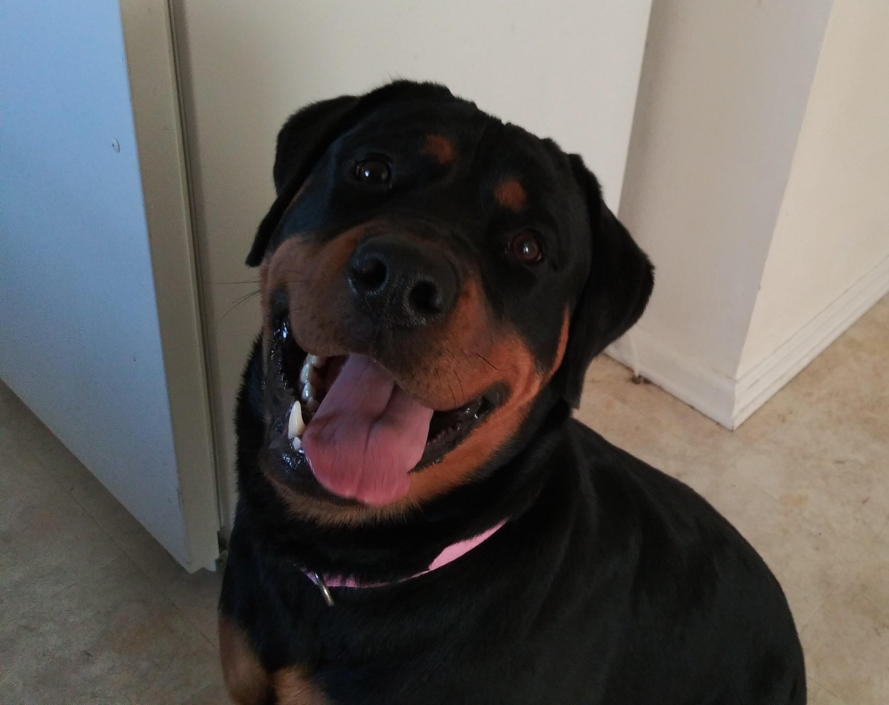 My sweet Rosie-20200620_075648_kindlephoto-47265621_1593614815115.jpg