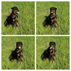 I Miss My Sarge Soo much-b6ea69d2-d065-4e32-ac2f-e77a7046a284.jpg