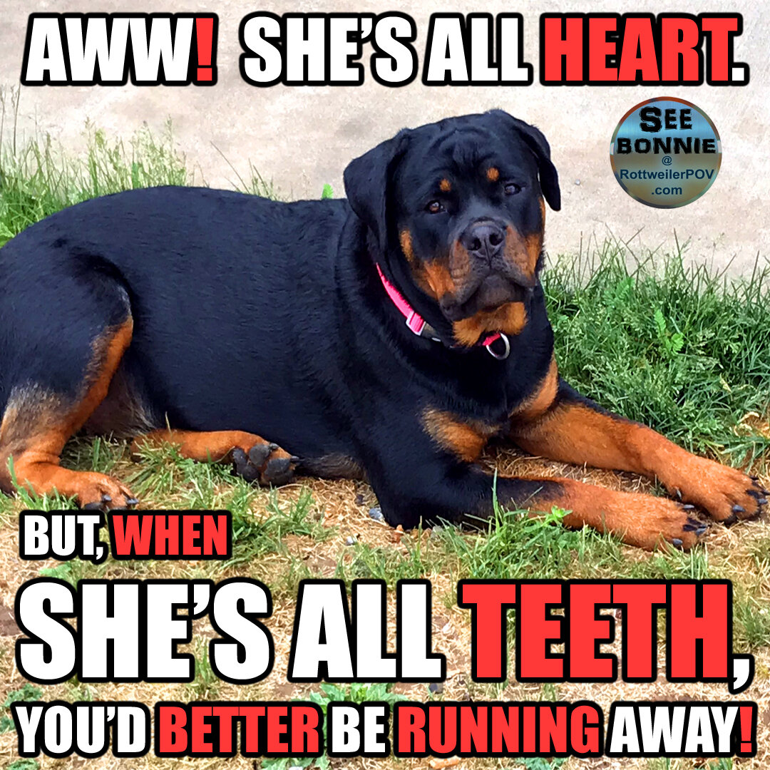 Rottweiler Blogging Options-bonnie-all-heart-all-teeth-copy-1594794092-5f0ea06cbbbab.jpg