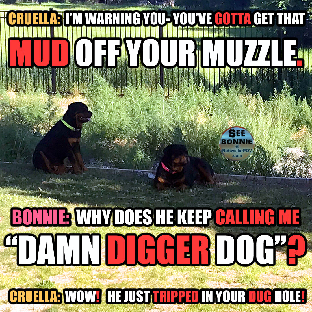 Rottweiler Memes for your Pleasure. Share please!-bonnie-digger-copy-1594953215-5f110dff3b8ce.jpg