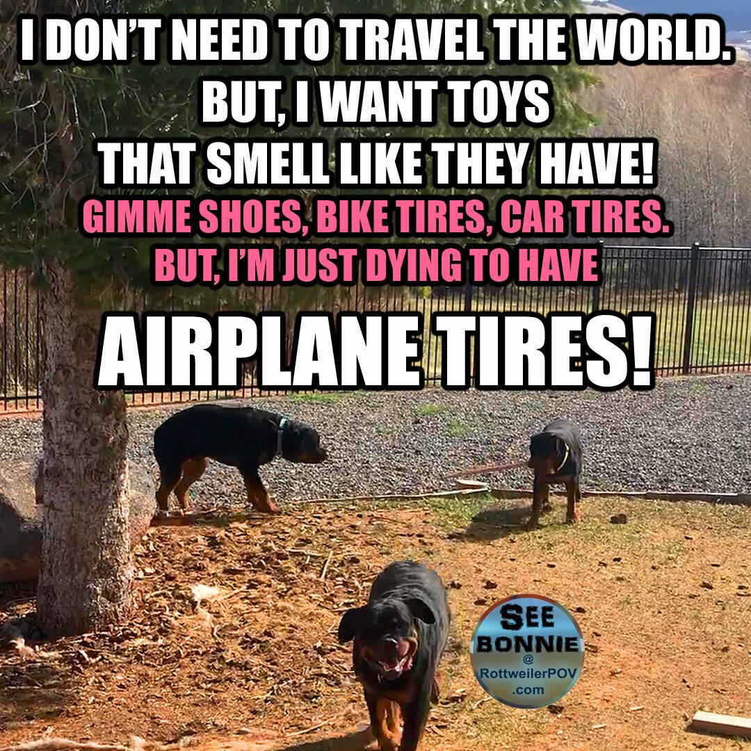 Rottweiler Memes-bonnie-travel-around-world-copy-1590467686-5ecc9c6635b3b.jpg