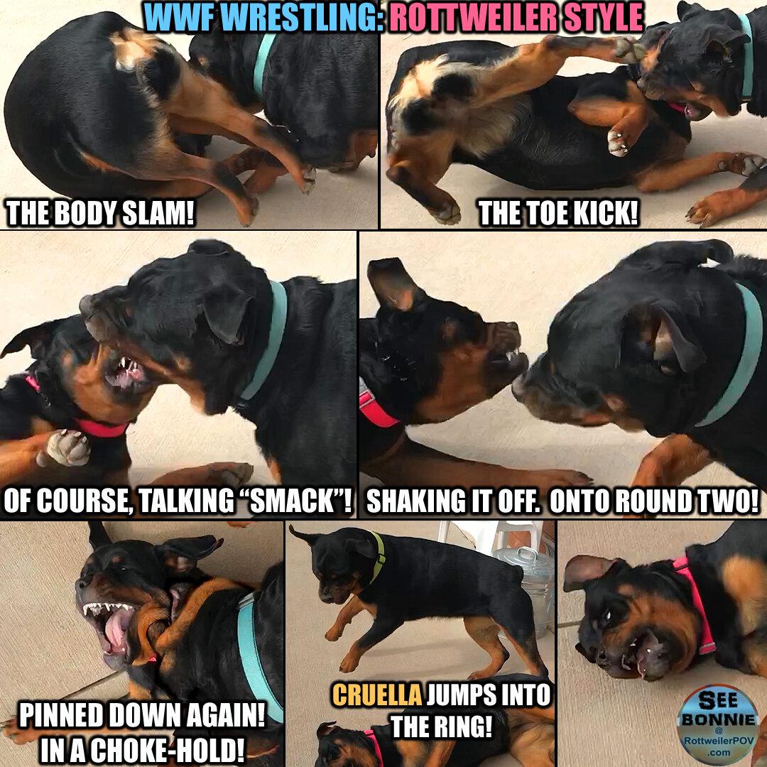 3 German Rottweilers Playing...So Cute!-bonnie-wwf-wrestling-copy-1590469512-5ecca38896f0c.jpg