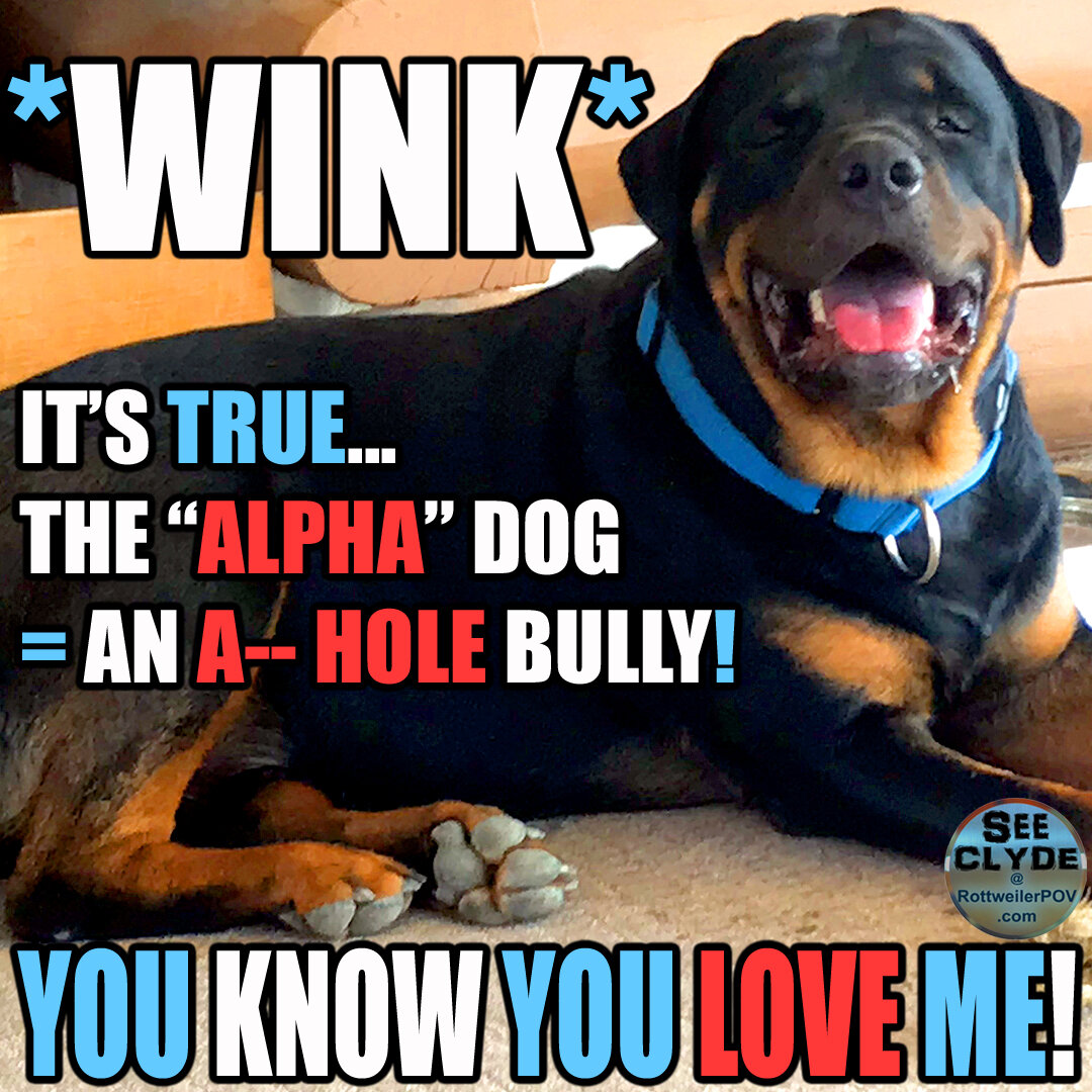 Rottweiler Blogging Options-clyde-alpha-ahole-copy-1595391360-5f17bd8066894.jpg