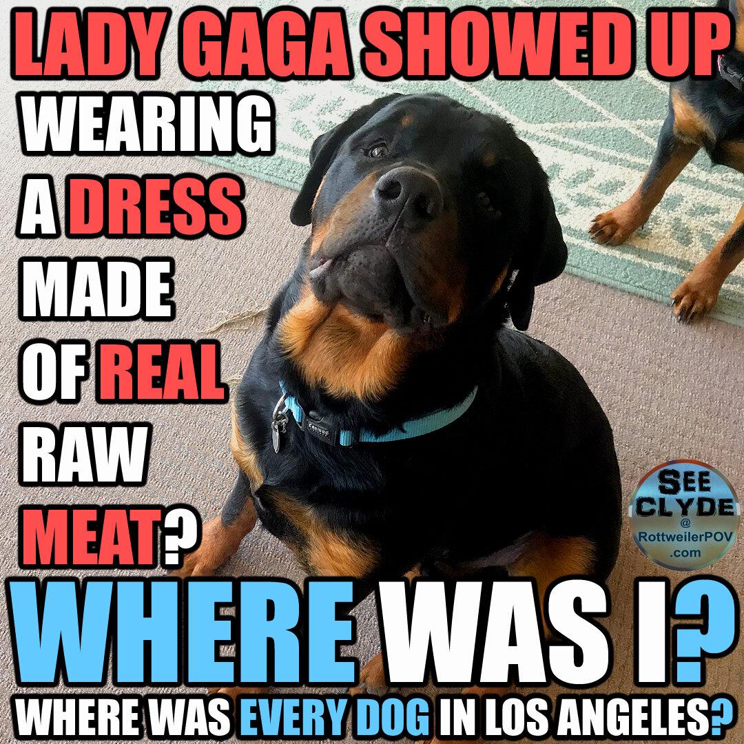 Rottweiler Memes-clyde-meat-dress-copy-1590467717-5ecc9c85e1c8d.jpg