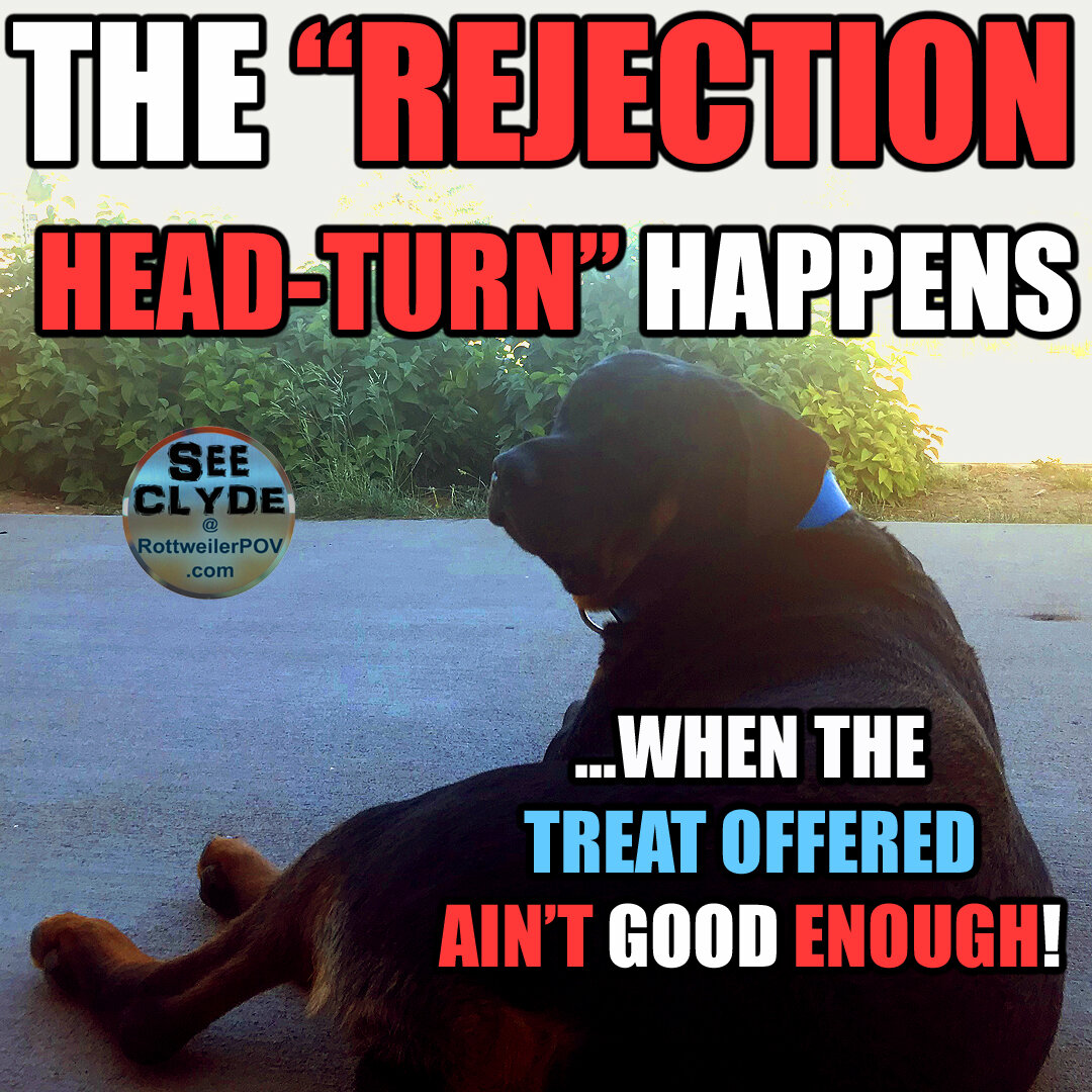 Rottweiler Memes for your Pleasure. Share please!-clyde-treat-rejection-copy-1595391252-5f17bd143f39a.jpg