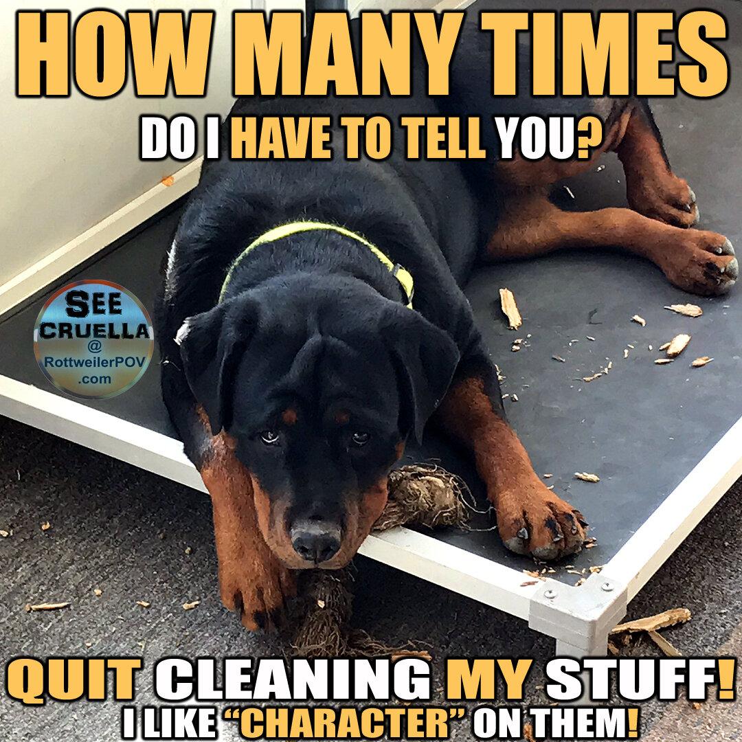 Rottweiler Memes-cruella-clean-toys-copy-1590467805-5ecc9cdd24124.jpg